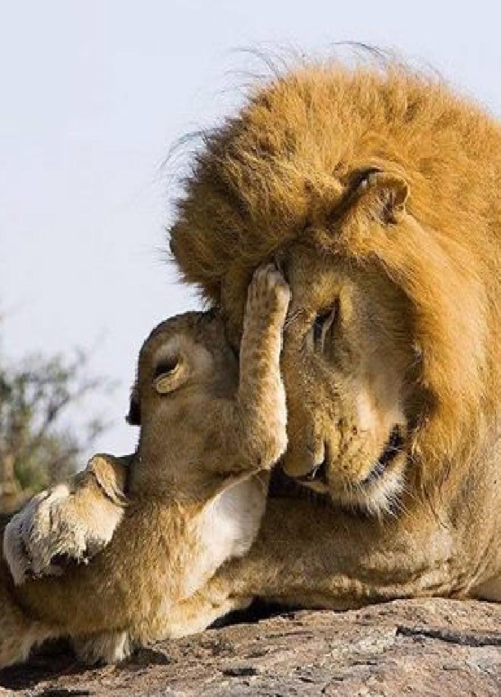 Сосет как львица 12 фотография