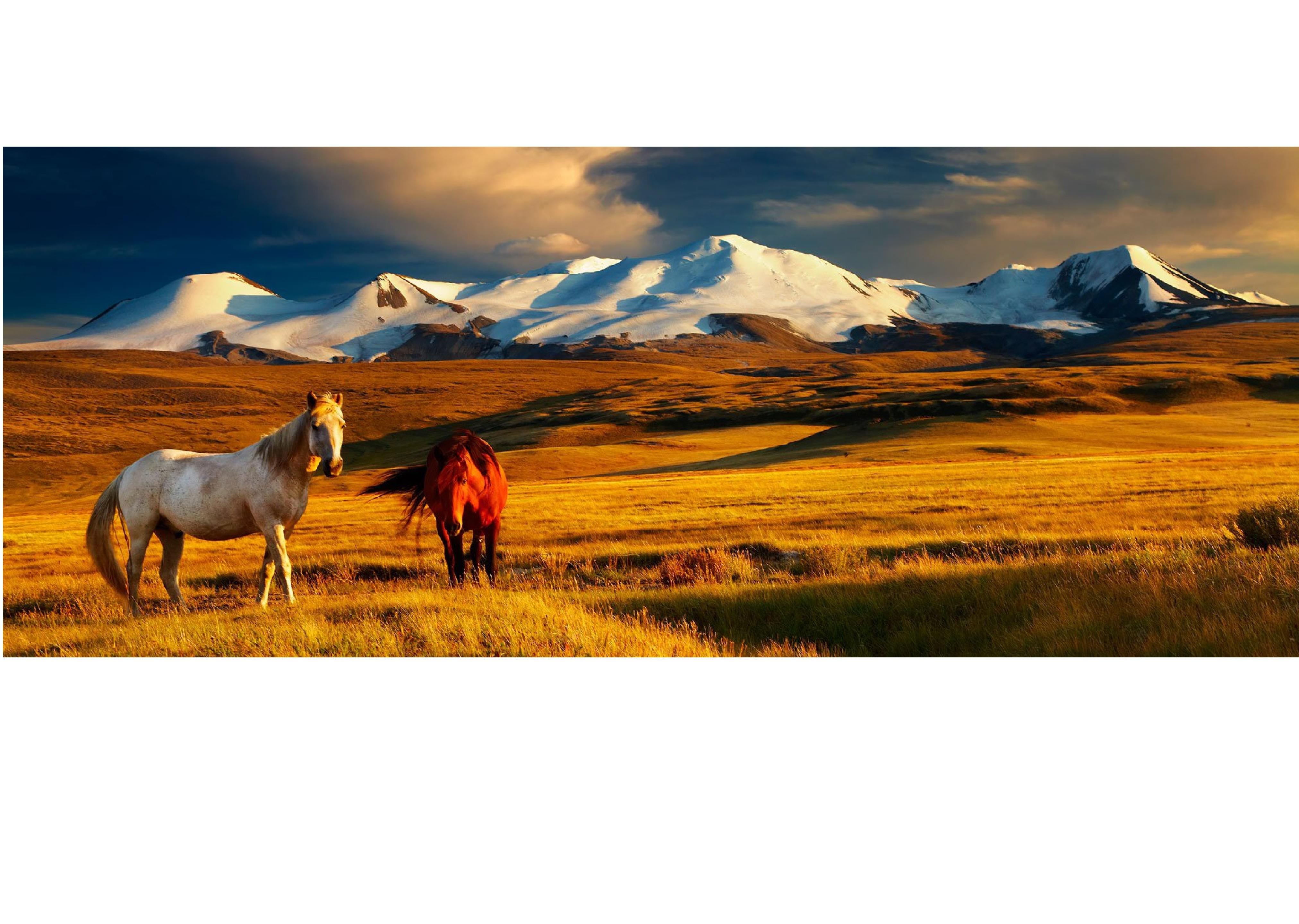 Mongolian Nature Essay